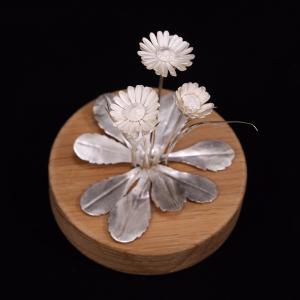 Silver common daisy flower
