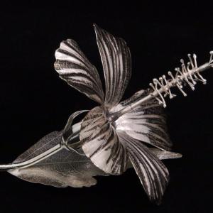 Silver hibiscus flower